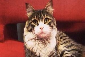 CHP'nin fenomen kedisi Şero'dan twitter'a veda!