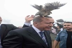 Erdoğan'ın keklikle imtihanı!