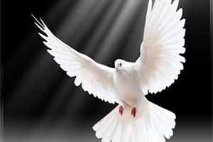 200 aydından 1 Eylül'de barış çağrısı!