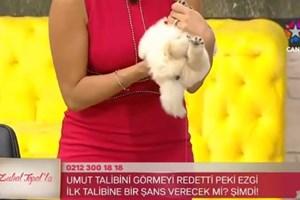 Canlı yayındaki köpek Zuhal Topal'ın kucağında işedi