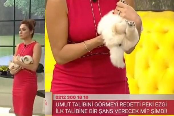 Köpek canlı yayında Zuhal Topal'ın kucağına işedi!