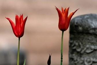 Türk sporunun acı günü! Ünlü hoca hayatını kaybetti!