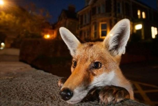 BBC seçti; işte yılın en iyi fotoğrafları!