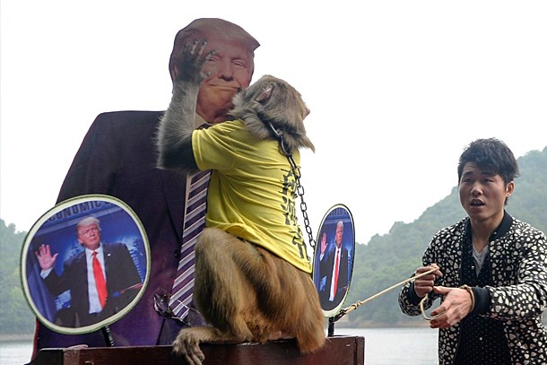 """Medyaya zehir zemberek 'Trump' sorusu: Bir """"Kahin Maymun"""" kadar olamadınız mı kardeşim?.."""
