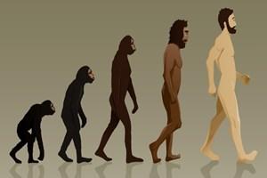 Vahdet yazarından 'tersine evrim teorisi': Afrika'daki şempanzeler lanetlenmiş Yahudi!