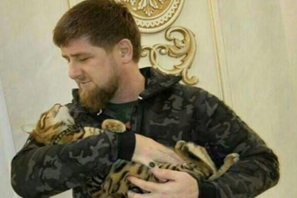 Sosyal medya Kadirov'un kedisi için seferber oldu