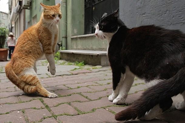 'Kedi' belgeseli Time'ın 'En iyi 10 film' listesinde ilk beşte!
