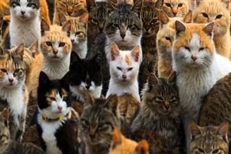 Times: Erdoğan'ın baskısı artarken, metroda kedi köpek videosu yayınlanıyor
