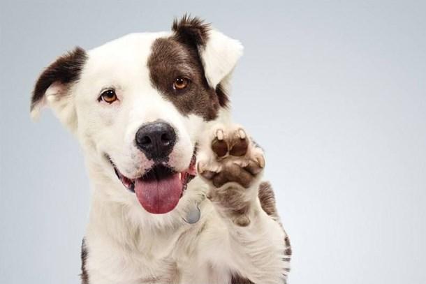 Karşılıksız sev ömür boyu sahiplen! Hayvan sevme etkinliğine büyük ilgi!