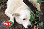 TRT hayvan severleri kızdırdı! (Medyaradar/Özel)