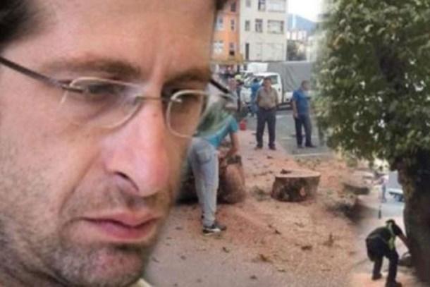 Rize'de kesilen asırlık çınar ağacının haberini yapan gazeteciye soruşturma!
